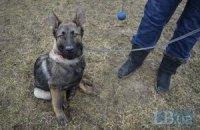 Волонтеры купили собаку-ищейку для разведки в зоне АТО
