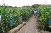 Украина увеличила посевные площади зерновых, пользующихся спросом за рубежом