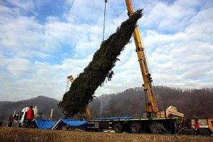30-метровую карпатскую ель подготовили к транспортировке в Ватикан