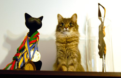 Кішка Мурка від вінничанина Володимира