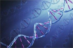Швейцарцы предложили выбирать половых партнеров по ДНК