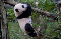 Пятничная панда #161