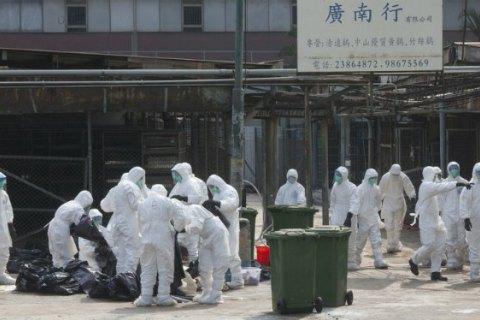 У Південній Кореї через пташиний грип знищено 26 млн качок і курей