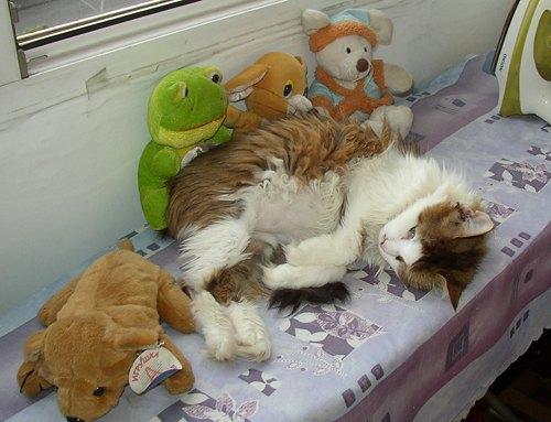А это - спящая с игрушками Маркиза. Фото того же авторства