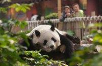 П'ятнична панда #179
