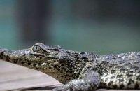 Крокодил Фиделя Кастро покусал пенсионера в стокгольмском океанариуме