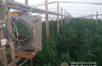 """В Запорожской области полицейские """"накрыли"""" плантацию марихуаны площадью более 5 ГА"""