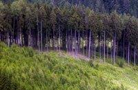 В 2020 году растительному миру Украины нанесено около 312 млн гривен убытков