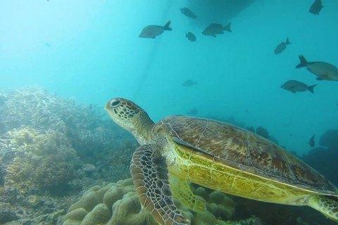 """Австралія погіршила прогноз для Великого Бар'єрного рифу з """"поганого"""" до """"дуже поганого"""""""