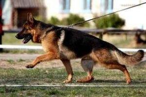 Власти Литвы запретили держать в многоэтажных домах бойцовских собак