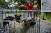 В Донецке приняли жесткие правила содержания кошек и собак