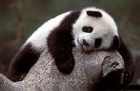 Пятничная панда #75