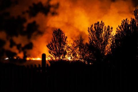 В Британии горел родной лес Винни-Пуха