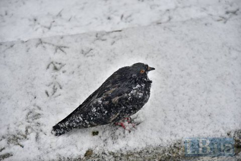 В среду в Киеве до +2 градусов и небольшой мокрый снег