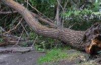 Запорізька область постраждала від шквального вітру