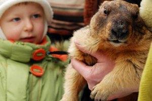Харківський бабак передбачив тривалу зиму