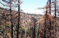 На Волині дерево розчавило чоловіка