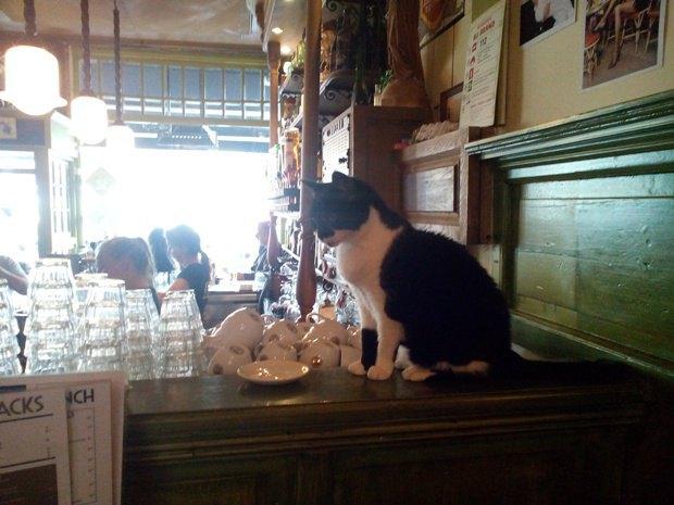 Smokey - кошка, которая 20 лет живет в баре