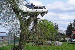 Поляк нашел свой автомобиль на дереве