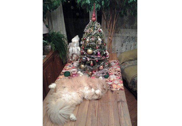 Новогоднее расслабление