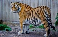 У Німеччині тигр загриз жінку