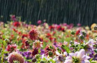 В Киеве 18 июня до +28, кратковременный дождь