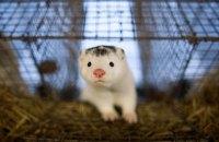 Данія заборонить норкові ферми до кінця 2021 року
