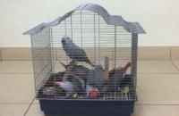 В самолете из Турции одесские пограничники обнаружили экзотических попугаев