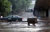 У Тбілісі шукають ще одного тигра і гієну, які втекли