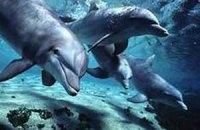 В харьковском дельфинарии родился детеныш дельфина