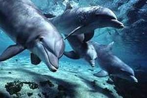 В Крыму из реки вытащили раненого дельфина