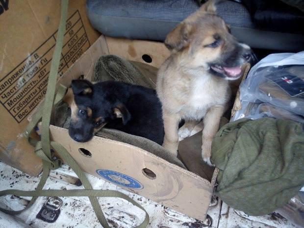 Собаки по пути в мирный Днепропетровск