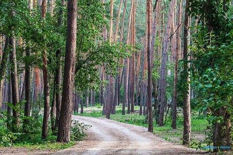 Інвестиціям у лісове господарство заважають бюрократія і зарегульованість, - радник Мінагрополітики