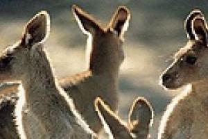 Австралии грозит экологическая катастрофа