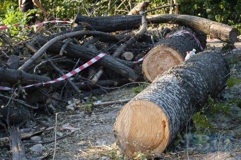 Протасів Яр: забудовник продовжує рубати дерева