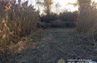 В Запорожской области нашли плантацию конопли с растяжками и охранниками