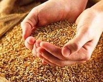 В 2011 году на поддержку  предприятий АПК в Днепропетровской области направлено около 130 млн грн