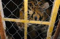 У Києві на Жуковому острові знайшли замкнених у вольєрах тигрів