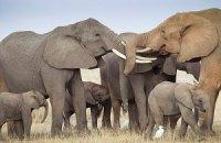 В Малави разъяренные слоны затоптали 7 человек