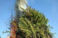 СБУ сожгла 60 тысяч кустов конопли в Черкасской области