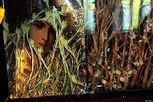 В одесском храме высохшие лилии на иконе пустили зеленые побеги
