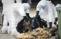 У Китаї зафіксували спалах пташиного грипу