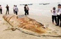 """На побережье Китая океан выбросил """"неизвестное чудовище"""""""