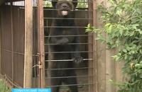 Сбежавший из зоопарка медведь убил пенсионера в пригороде Воронежа
