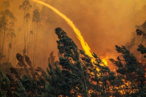 УПортугалії підозрюють, щосмертельні лісові пожежі почалися через підпал