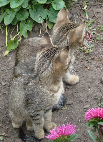 Котиков тоже прислала Юлия. Эти, похоже, близнецы...