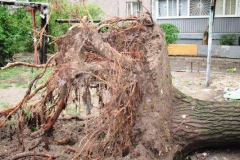 Буря в Західній Україні залишила без світла 477 населених пунктів