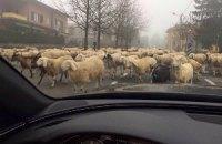 "Вівці не пускали капітана ""Мілана"" на базу"