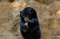 В «медвежьем центре» на Закарпатье уже трое подопечных