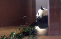 Пятничная панда #154